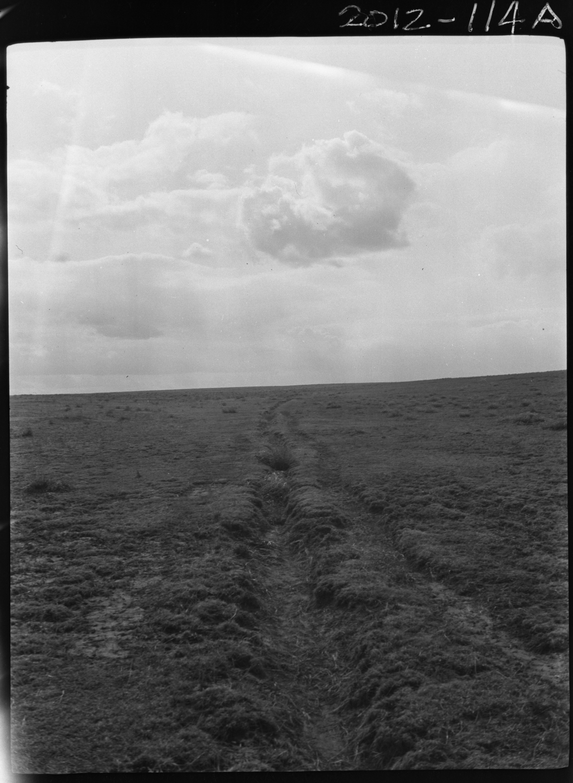 Bison tracks