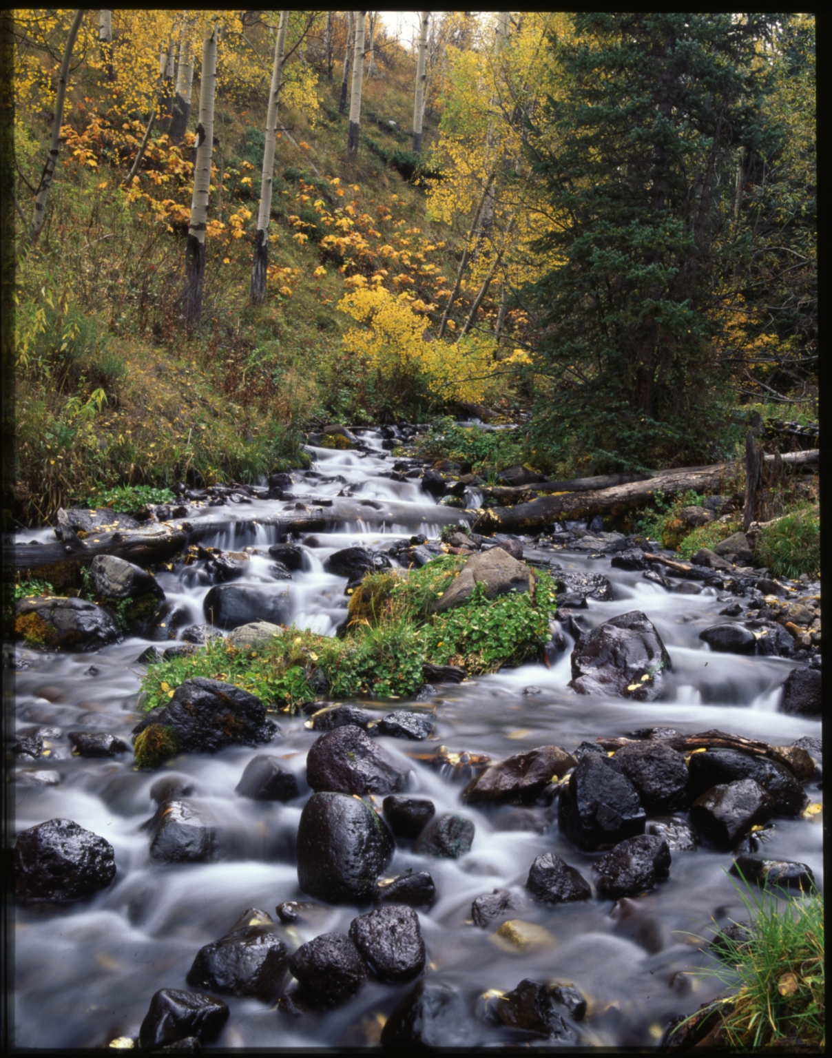 Creek in the Flat Tops Wilderness Area