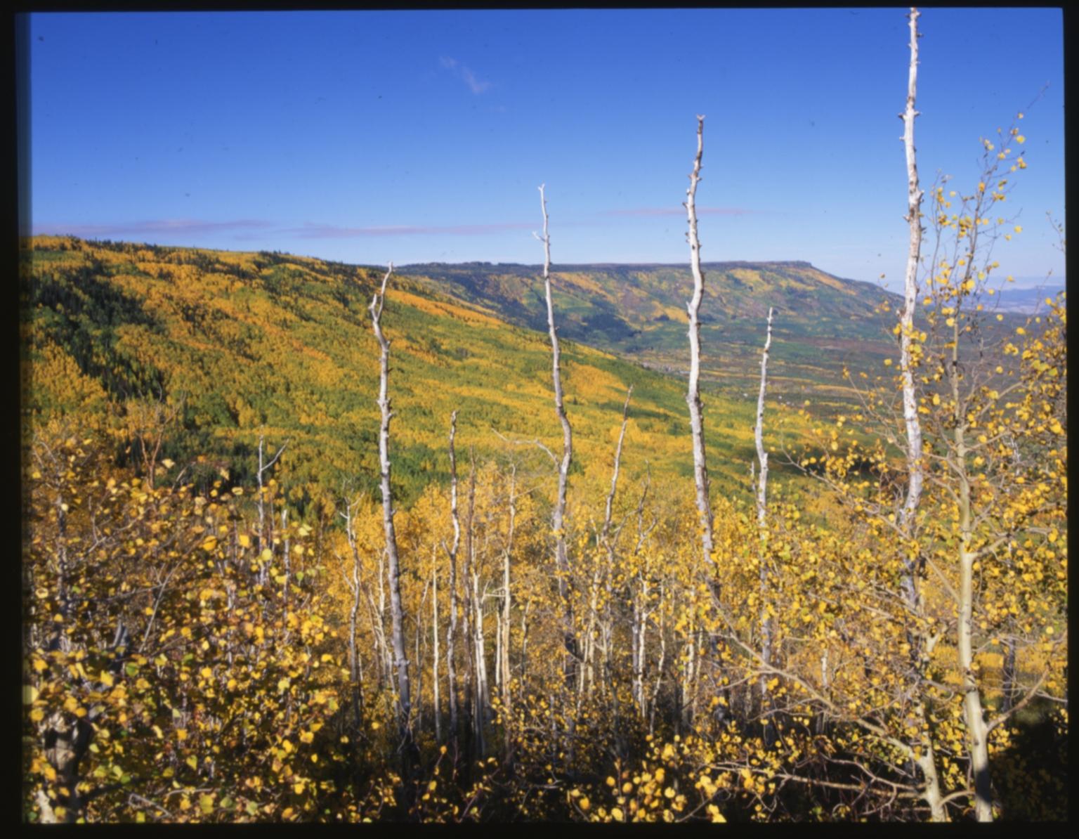Flat Tops Wilderness Area