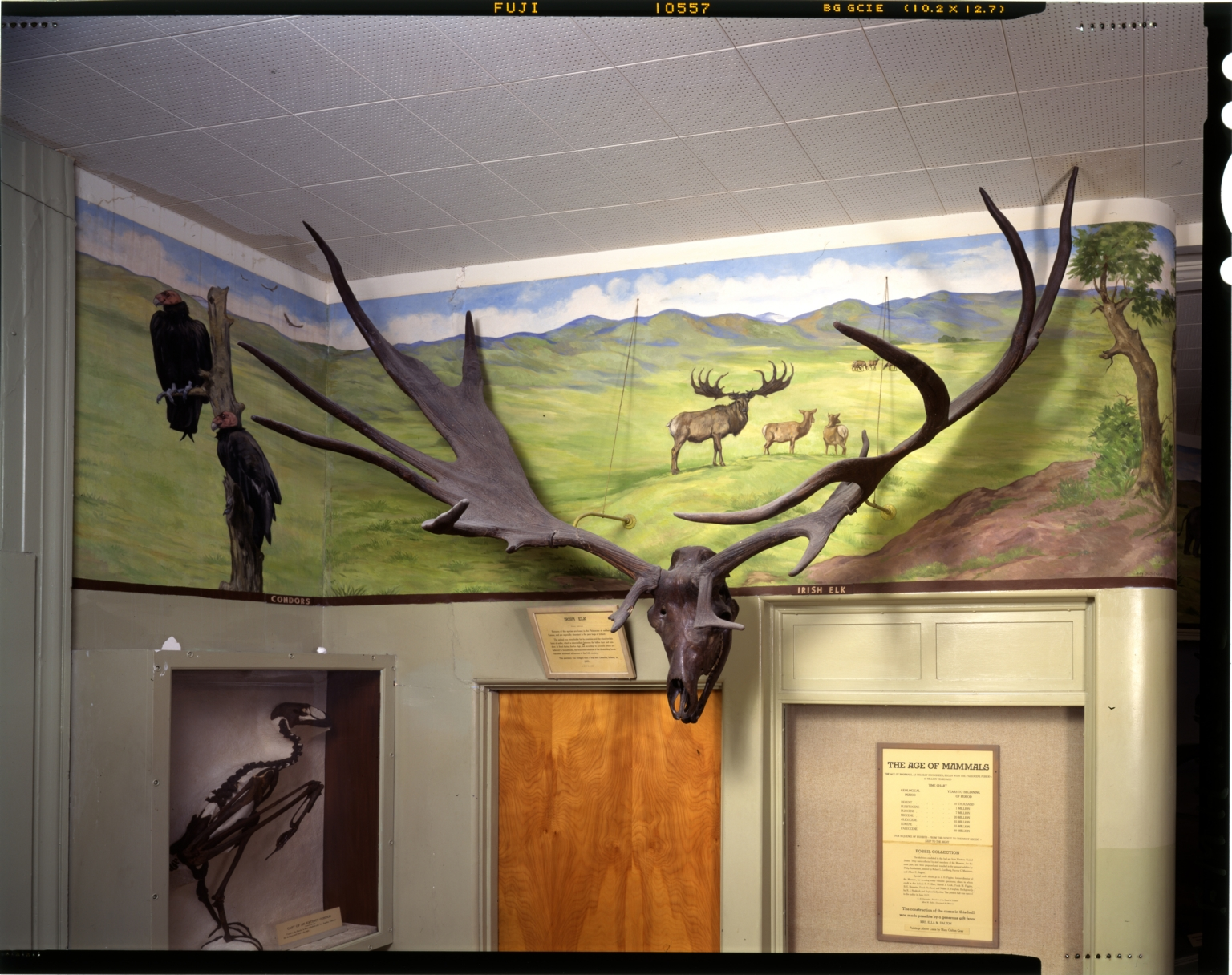 Old Fossil Mammal Hall Mural