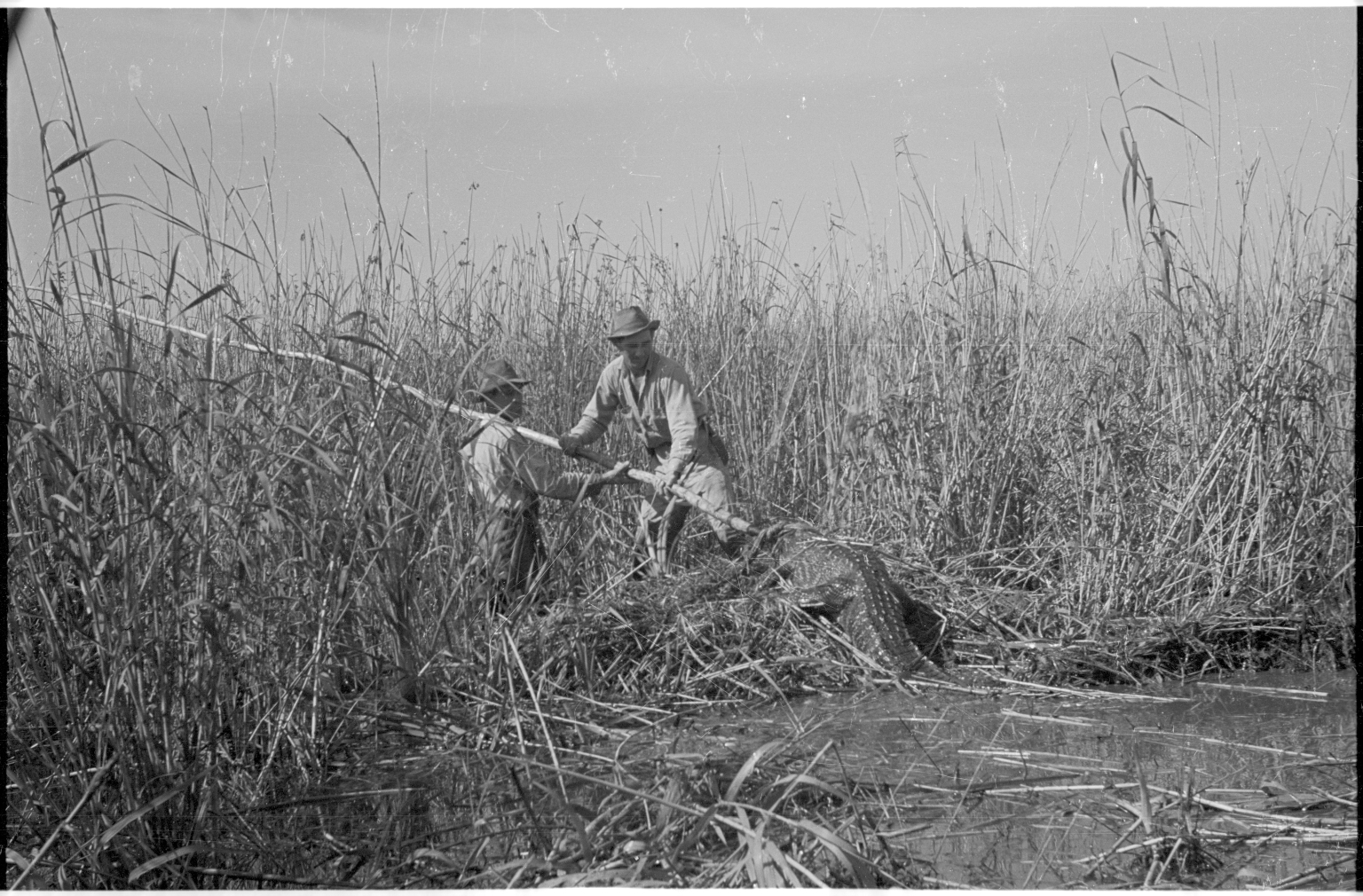Alligator hunting in Louisiana