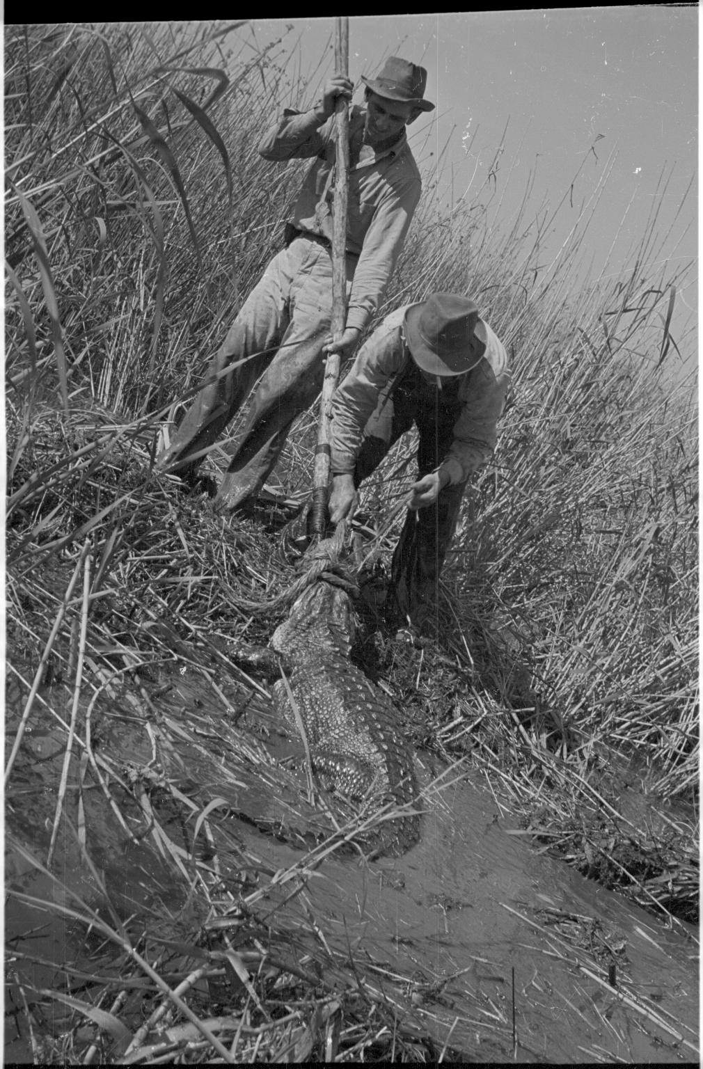 Alligator hunting in Louisiana