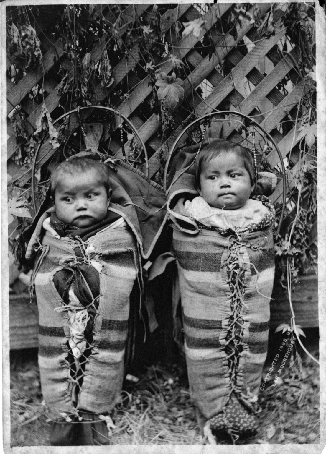 Sioux babies in cradleboards