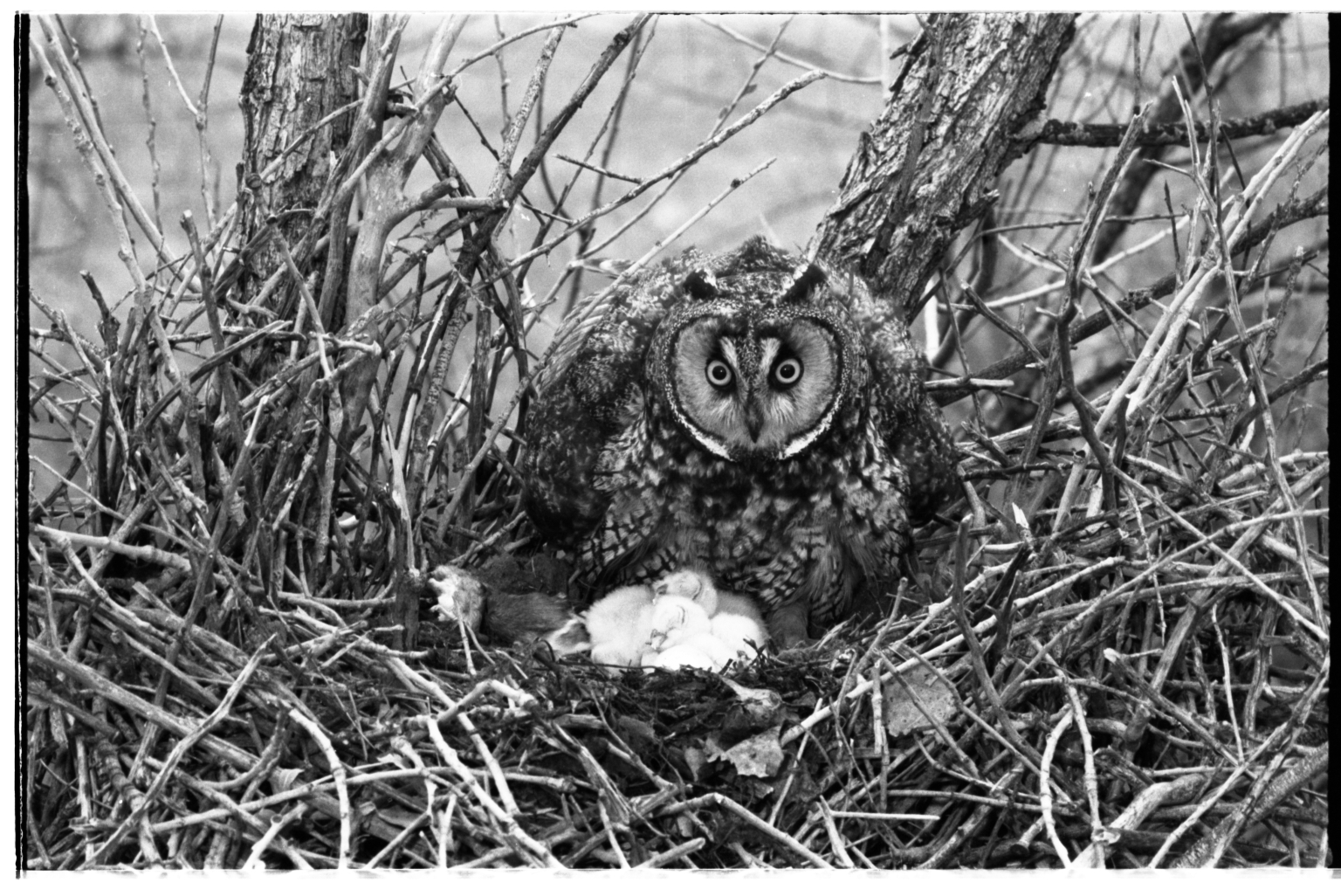 Owl and Nest