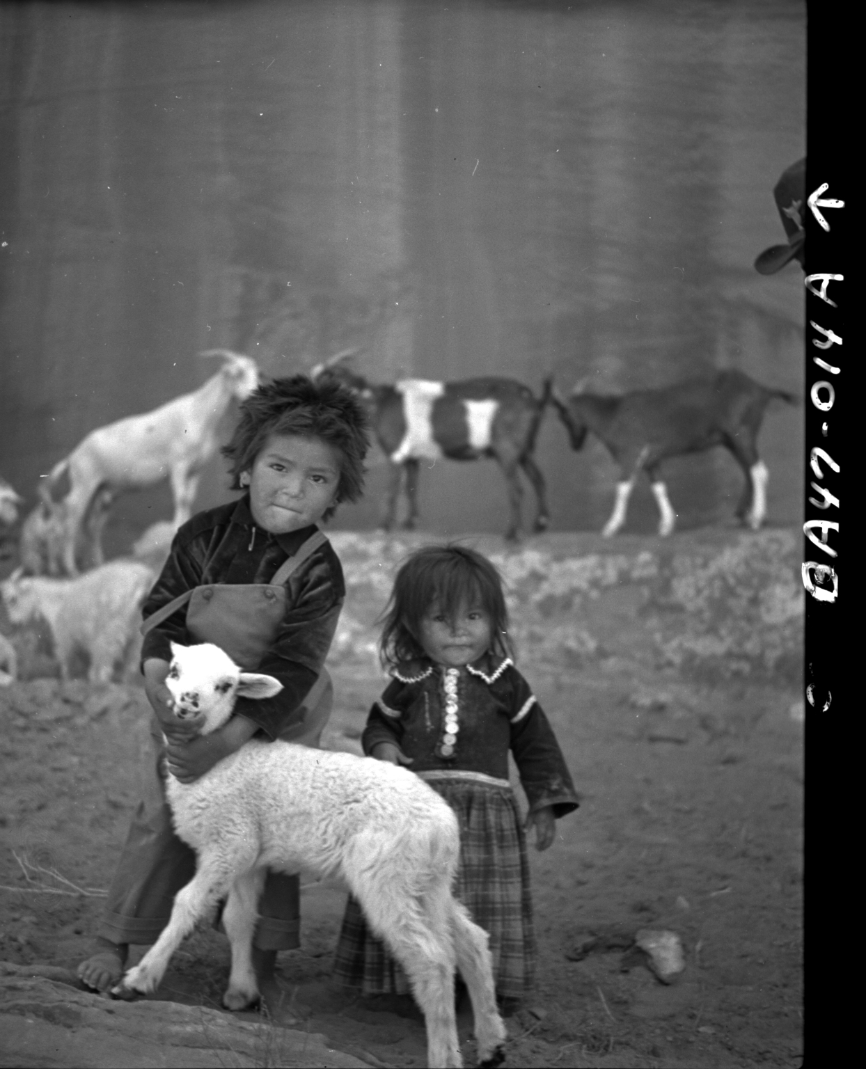 Navajo children with lamb