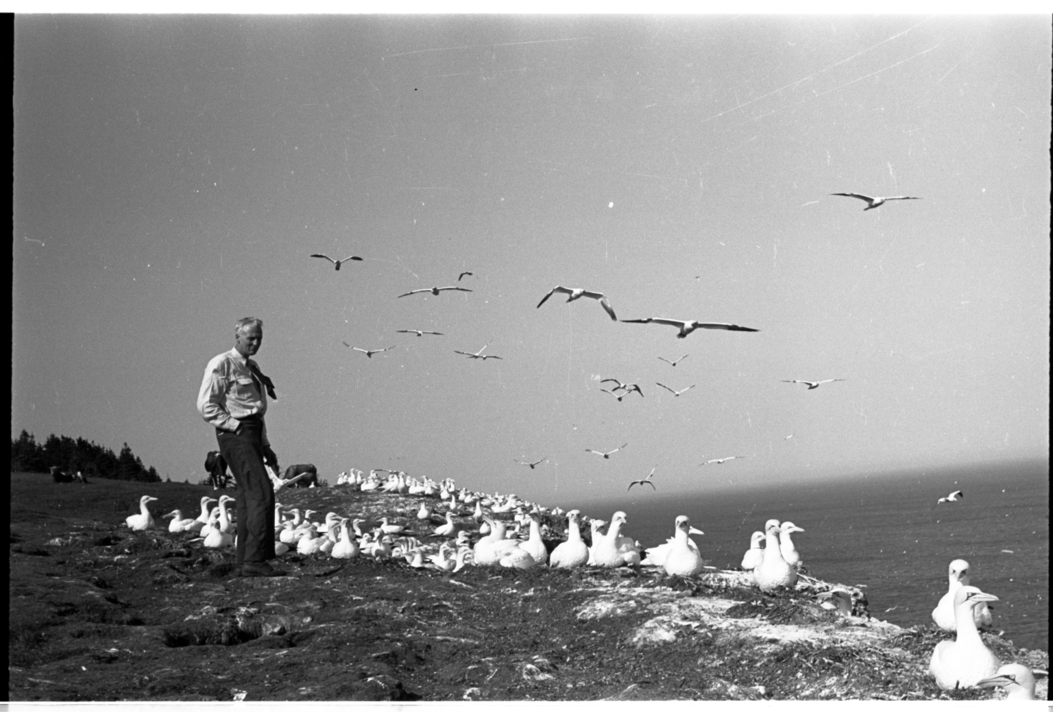 Field trip to study gannets for new exhibit Bonaventure Island