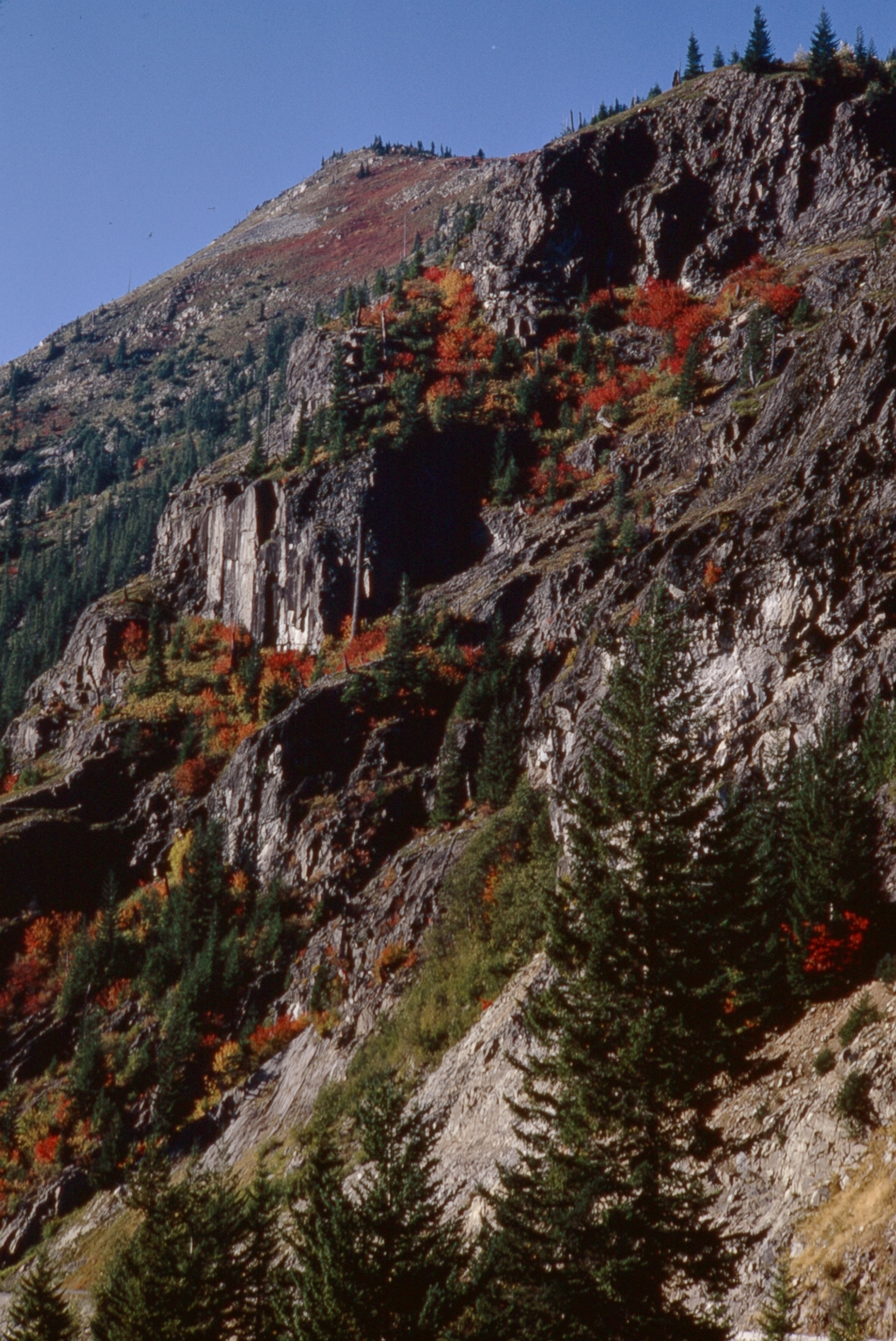 Fall foliage in Mount Rainier National Park