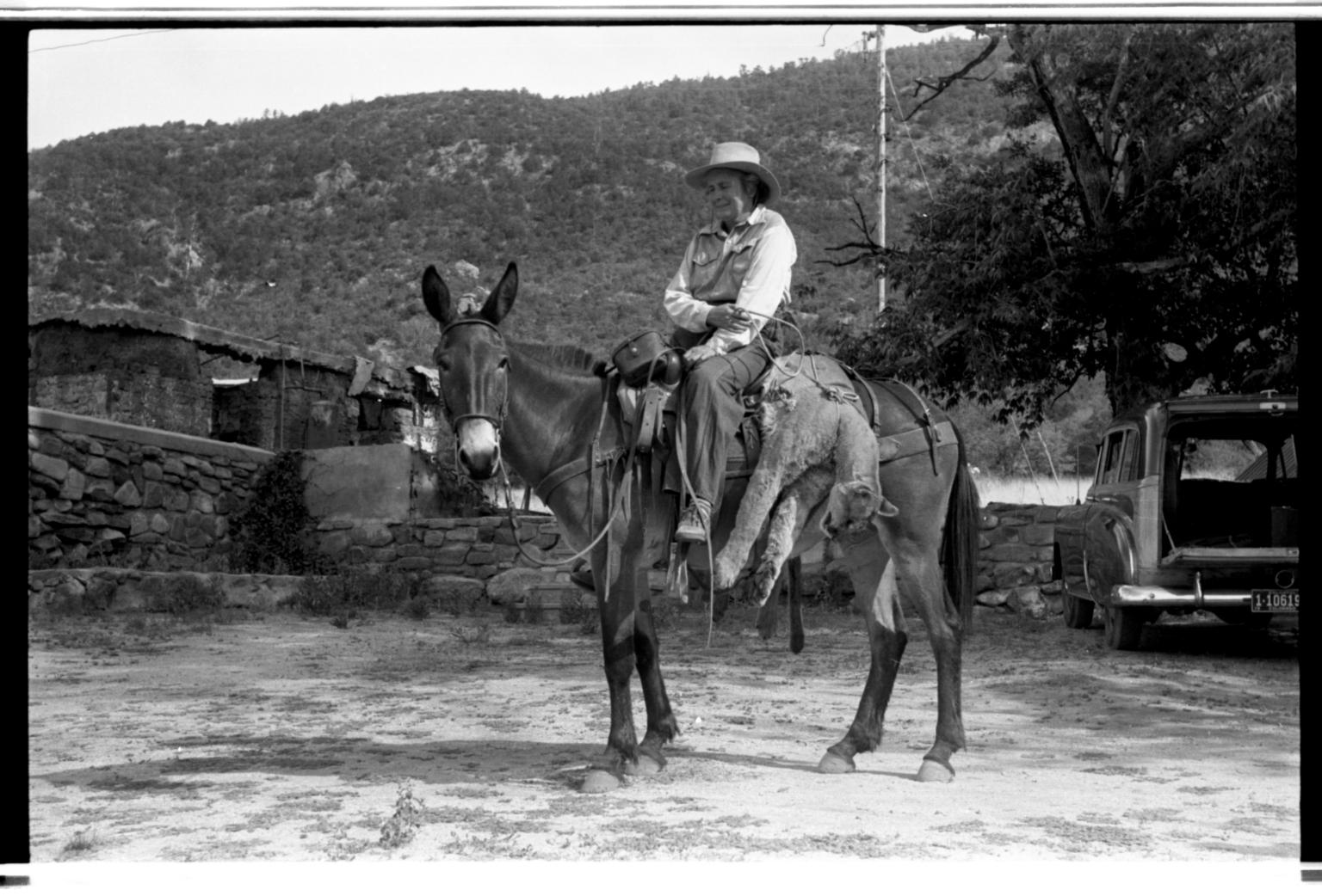 Ila Healy on Donkey