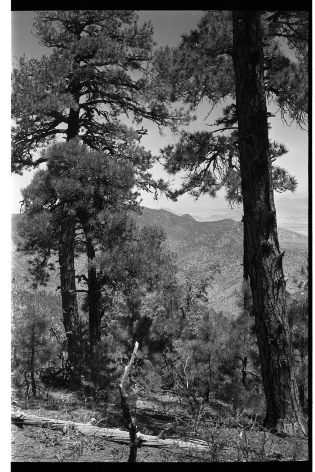 Huachuca Mountains, Arizona