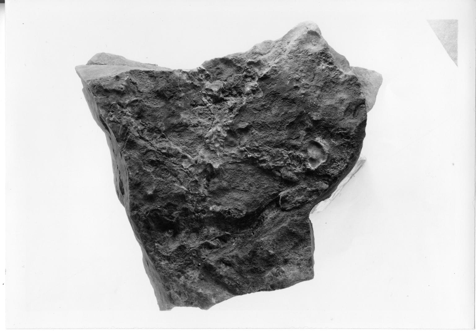 Fossil seaweed