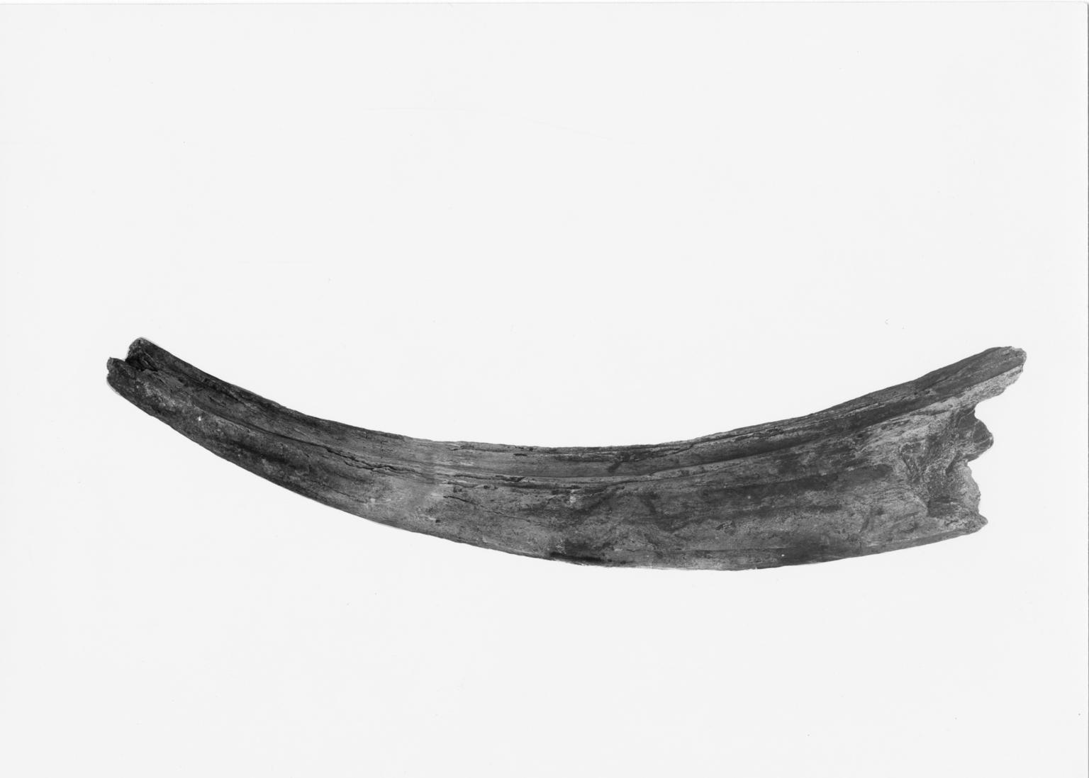 Bison angularis