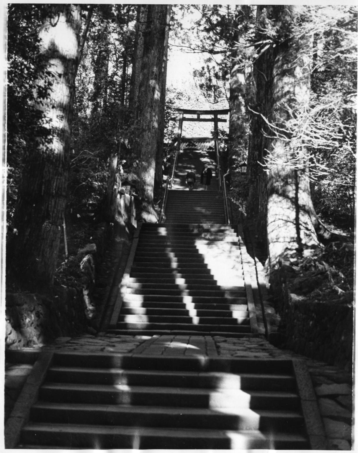 Hakone shrine stairway
