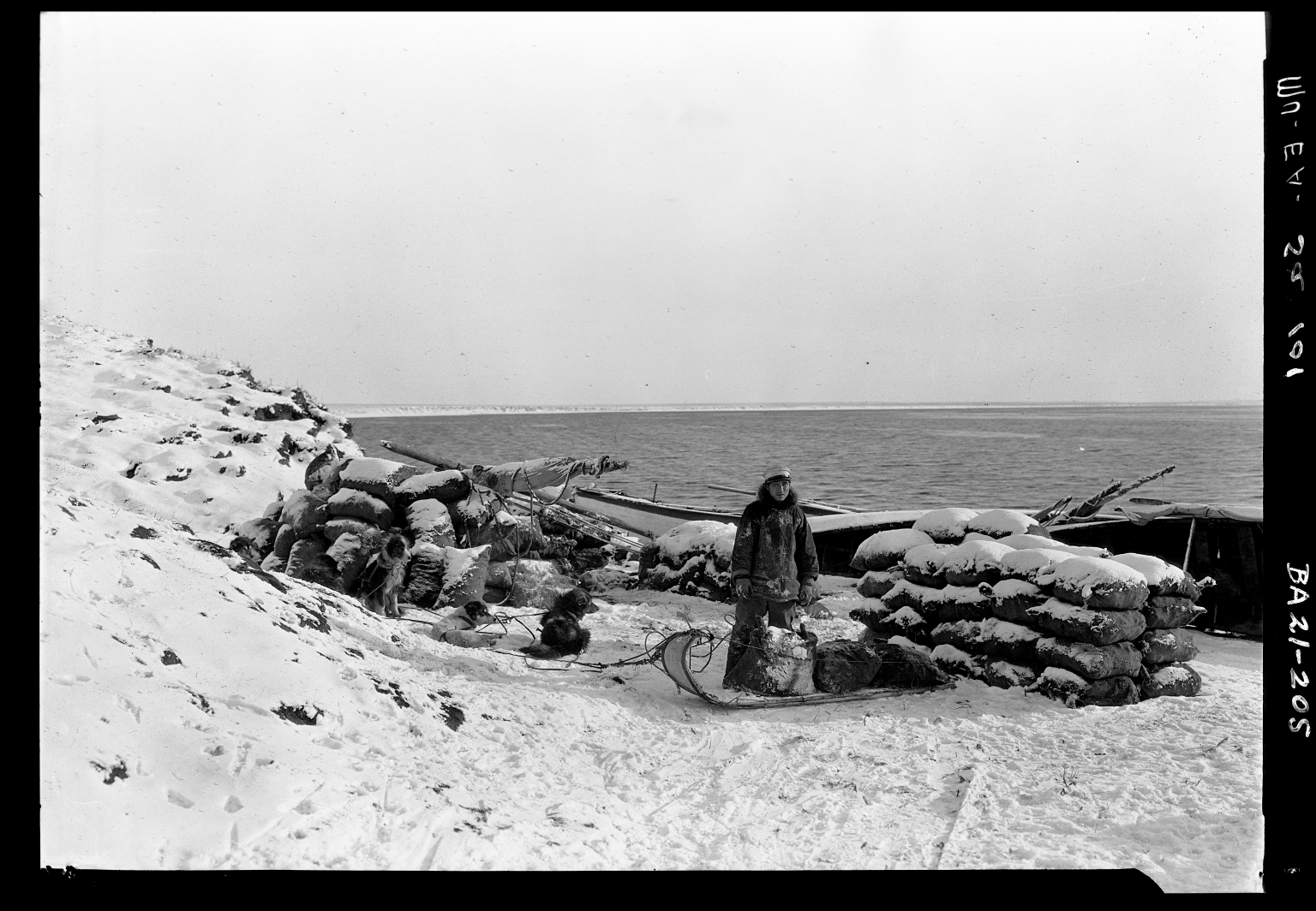 Eskimo man and his sled dogs with sacked coal in Wainwright, Alaska.