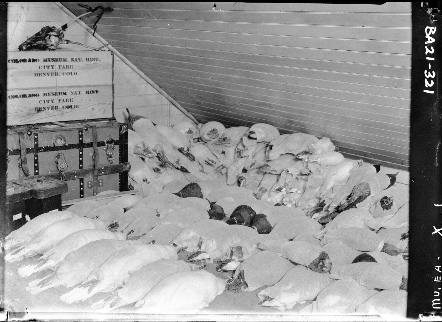 Museum specimens drying