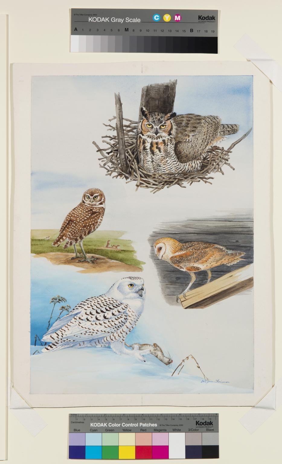Great Horned Owl, Burrowing Owl, Barn Owl, Snowy Owl