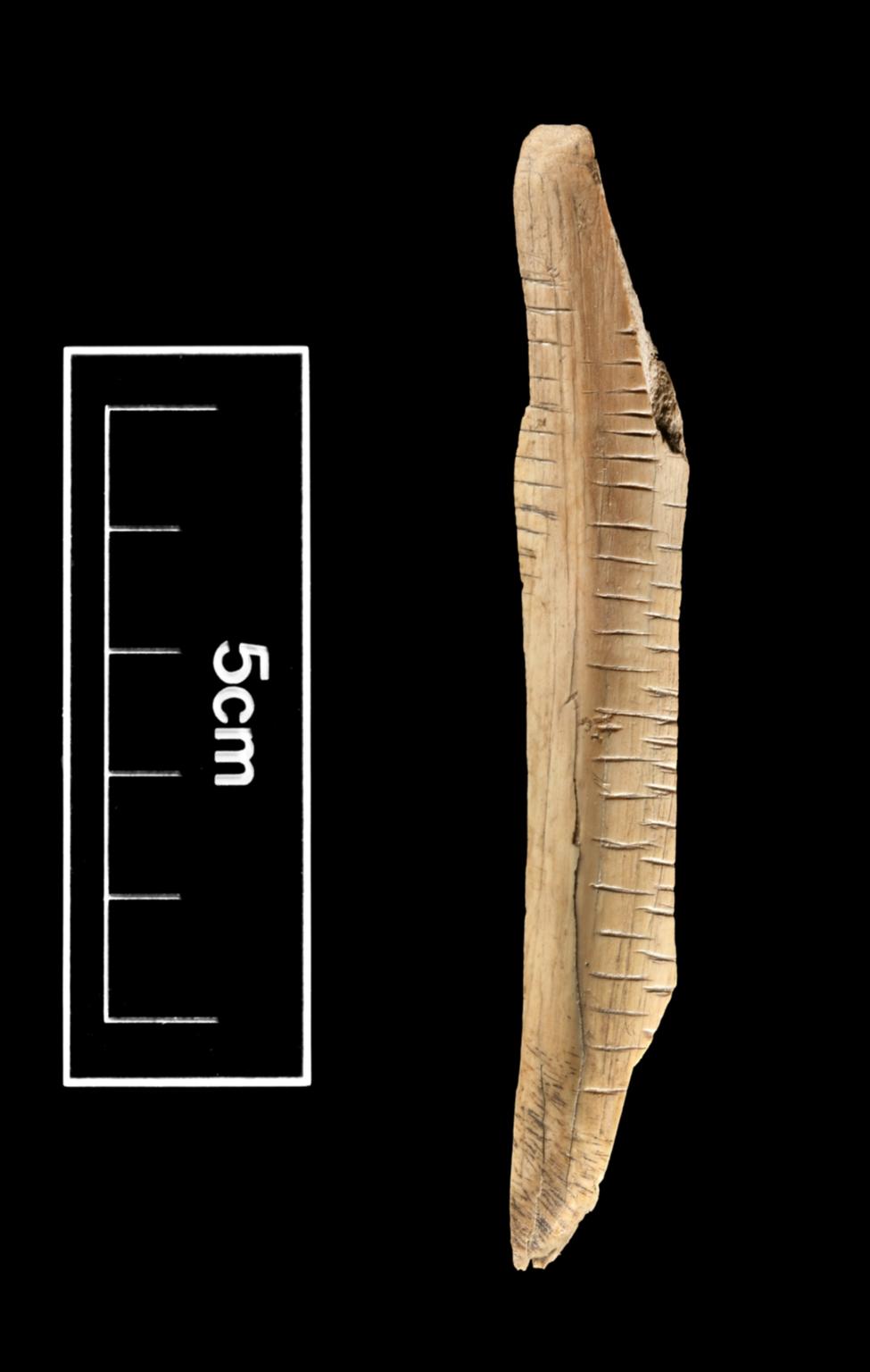 Incised bone artifact