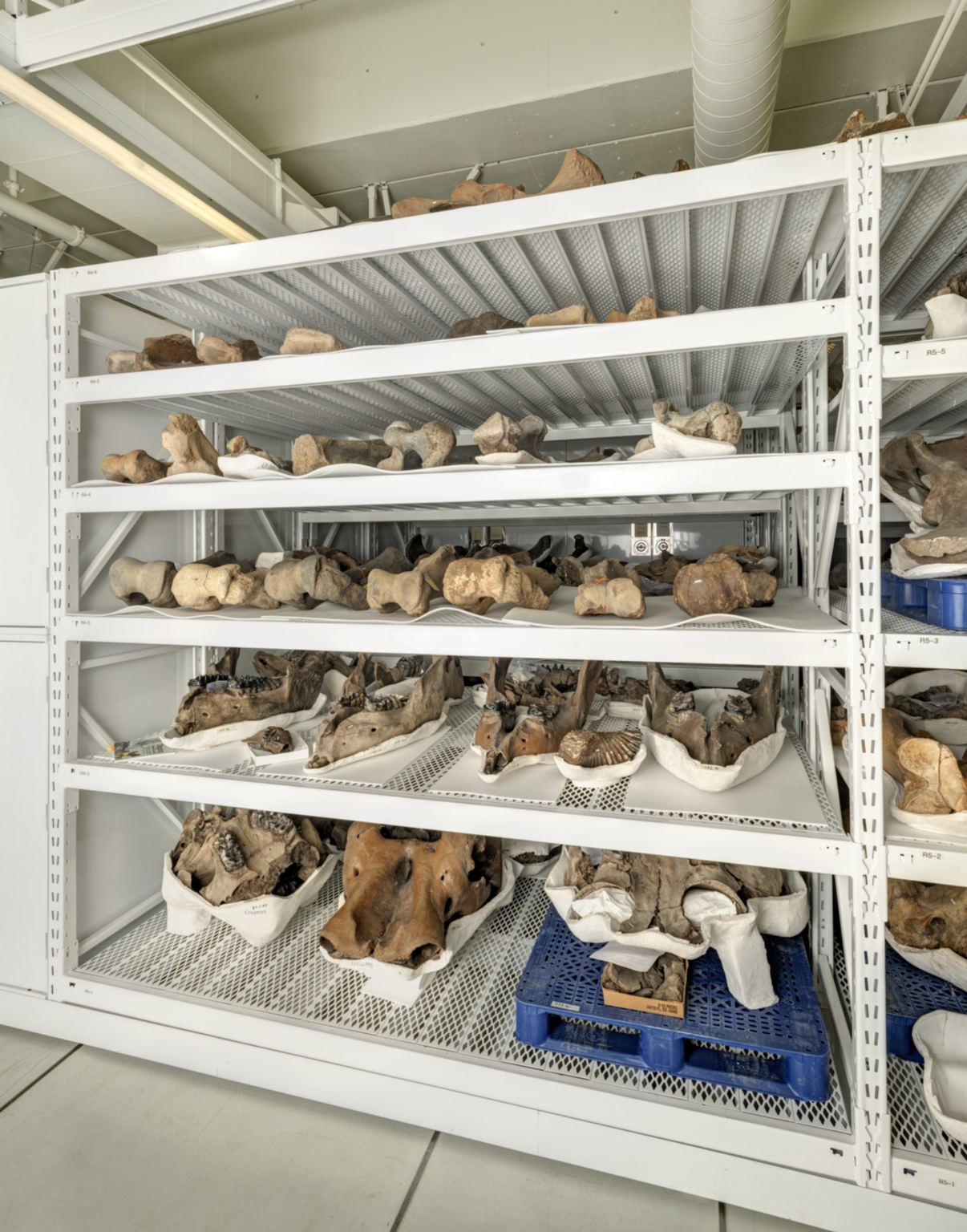 Paleontology Collections Space