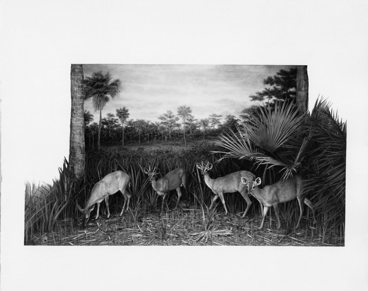 Brocket Deer Group