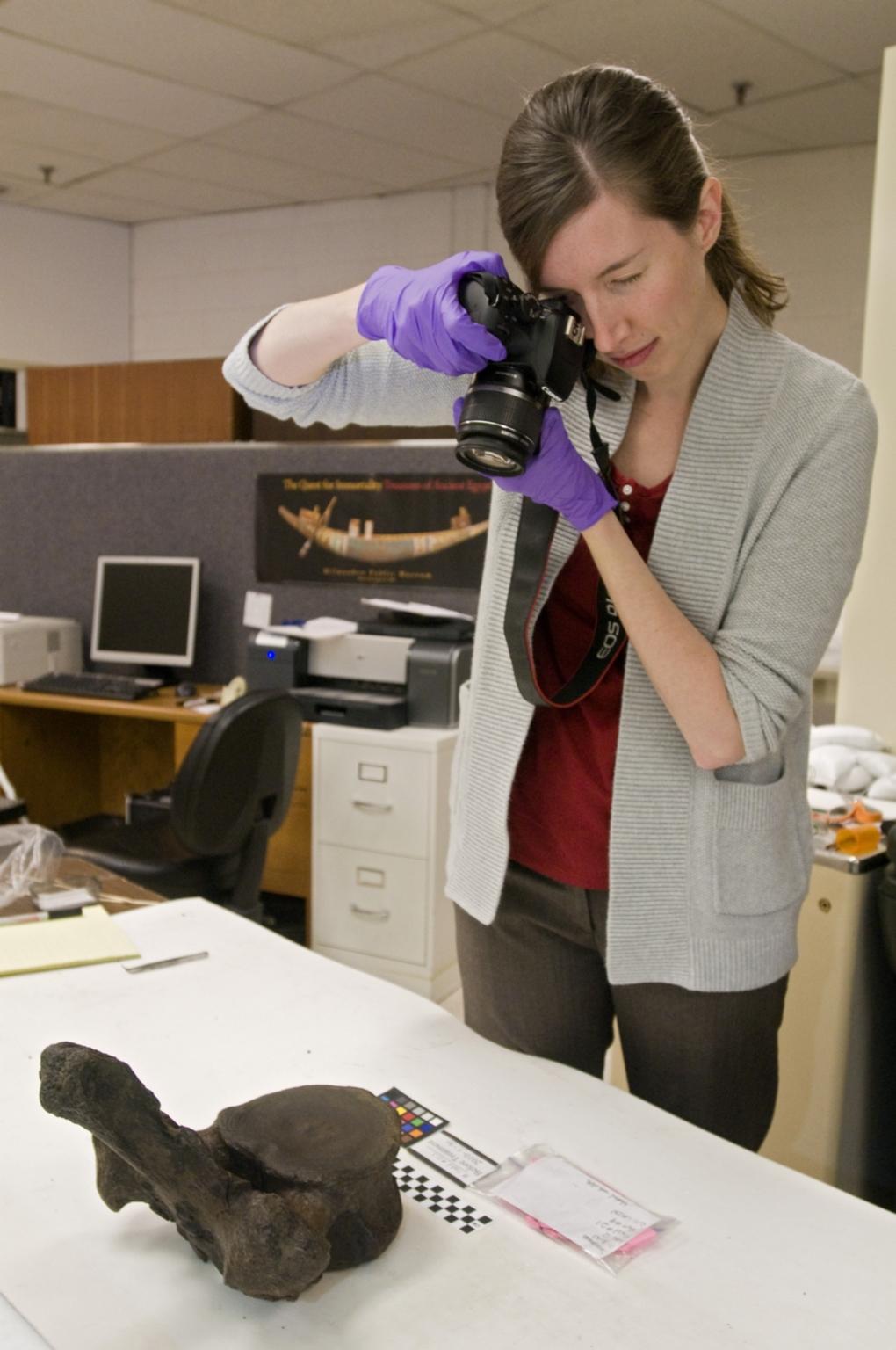 Photographing a vertebra from Snomastadon Excavation