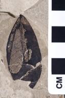 PC152 - leaf