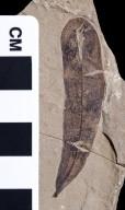 PC040 - leaf