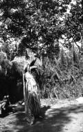 Jaguar Dance in Descalvados (ranch)