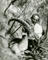 Abyssinian with ibex specimen in field