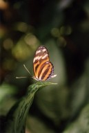 Close up of orange and black butterfly on leaf