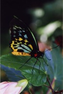 Close up of yellow, blue, and black butterfly sitting on leaf