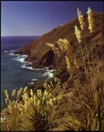 Windswept cliffs of Cape Reinga
