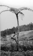 Filipino male climbing a tree