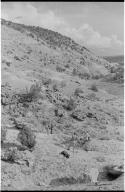 Allosaurus Dig Site