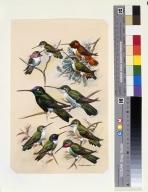 Calliope Hummingbir, Rufous Hummingbird, Rivoli's Hummingbird, Black-chinned Hummingbird, and Broad-tailed Hummingbird.