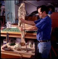 Ken Carpenter working on skeleton for hominid diorama