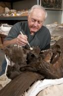 Work in Paleo Lab on bison skull from Snomastadon Excavation