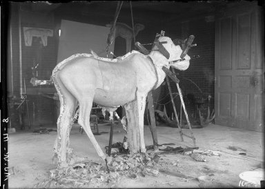Removing Moose Manikin from Mold