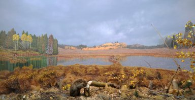 Beaver Diorama