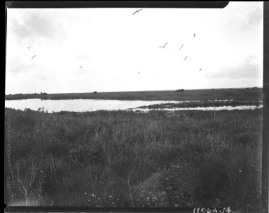 Flat lands and water