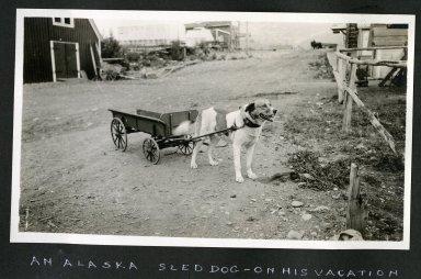 An Alaska Sled Dog on His Vacation