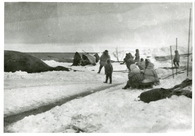 Eskimo whaler's camp and whale