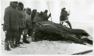 Eskimo working with tools to remove skin flaps.