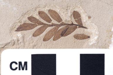 PC110 - leaf