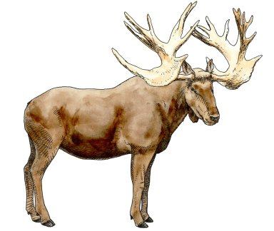 Stag Moose, Ice Age Mammal