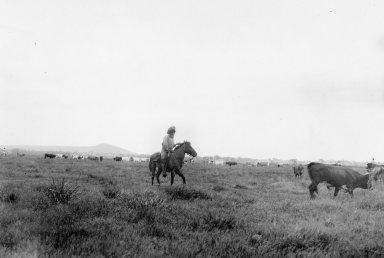 Round-up at Descalvados (ranch)