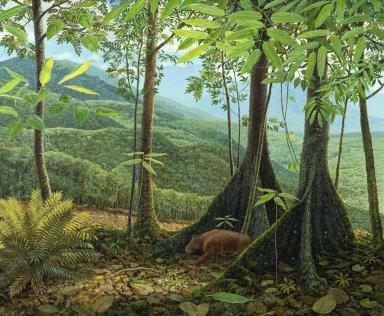Ancient Denvers Paintings - First Rainforest