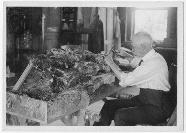 Frank Howland at work in fossil laboratory.
