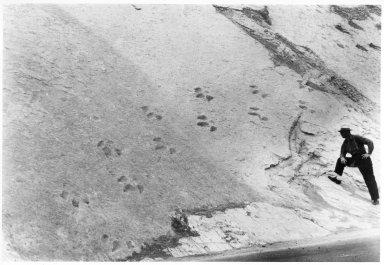 Dakota Hogback Dinosaur Tracks