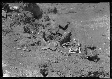 Mastodon bones exposed