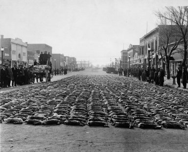 Dead rabbits lined up in street in town center