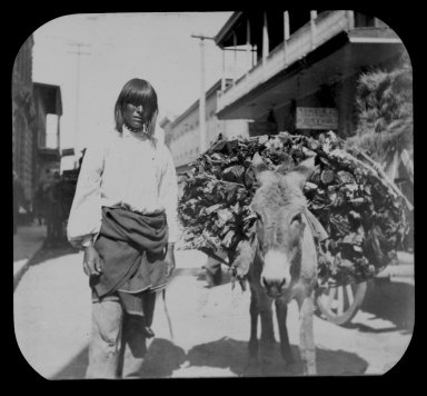 Pueblo Indian with a donkey carrying wood